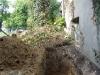 Drzewo które należy wyciąć ze względu na bliskość budynku oraz korzenie niszczące fundament budynku
